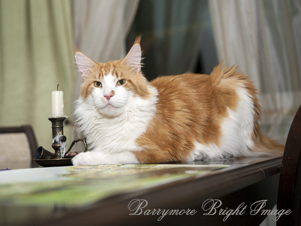 Barrymore Bright Image