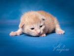 Кошка Н2