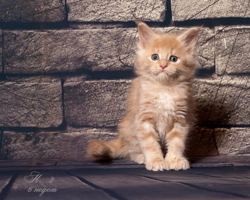 Hello Kitty Bright Image