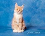 Juno Bright Image